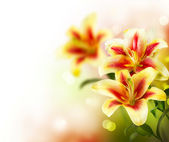 Lily Flowers border design.Spring Flowers — Stock Photo