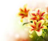 Flores de design.spring da fronteira de flores alvas — Foto Stock