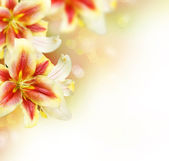 Lily Flowers border design.Summer Flowers — Stock Photo