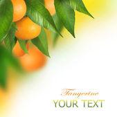 Ripe Tangerines growing. Border design — Stock Photo