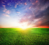 Green Field And Beautiful Sunset Or Sunrise — Stock Photo