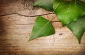 Ahşap arka plan üzerinde yeşil yaprakları — Stok fotoğraf