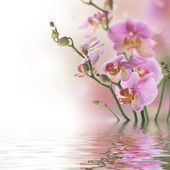 Beautiful Orchid With Reflection — Stock Photo