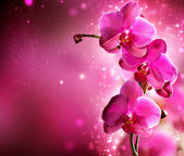 Orchid Flower border design — Foto Stock