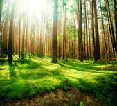 Mistige oud bos — Stockfoto