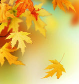 Autumn — Foto de Stock