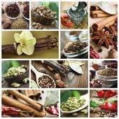 Conjunto de especiarias. vários temperos para cozinhar — Foto Stock