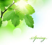 Spring Green Fresh Leaves Border — Stock Photo