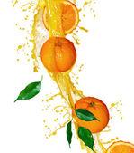 Frutos de naranja y jugo de salpicaduras sobre blanco — Foto de Stock