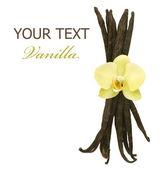 Piękne wanilii fasoli i kwiat — Zdjęcie stockowe