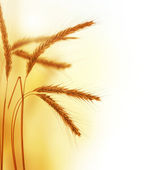 Frontière de blé — Photo