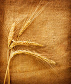 小麦耳朵在麻布背景 — 图库照片