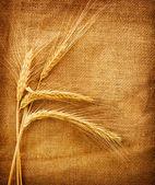 Weizen ohren gegenüber dem jute-hintergrund — Stockfoto