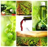 Wine. Beautiful Grapes Collage — Stock Photo