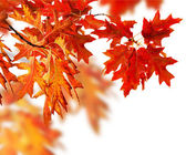 Autumn Leaves Border — Stock Photo