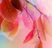 Autumn Leaves design — Stock Photo