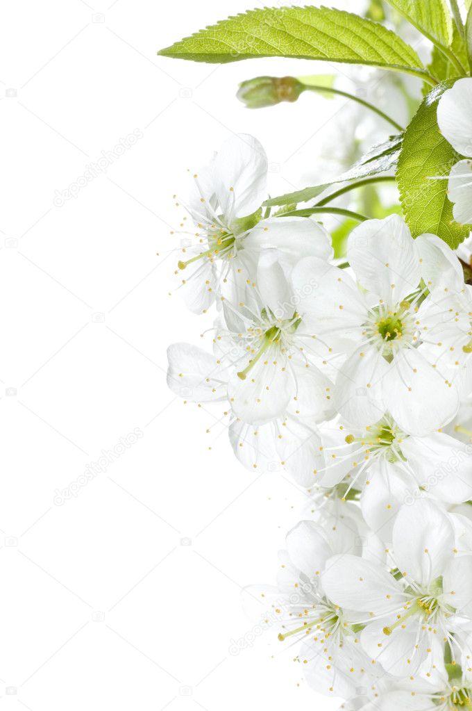 春天的花朵边框— photo