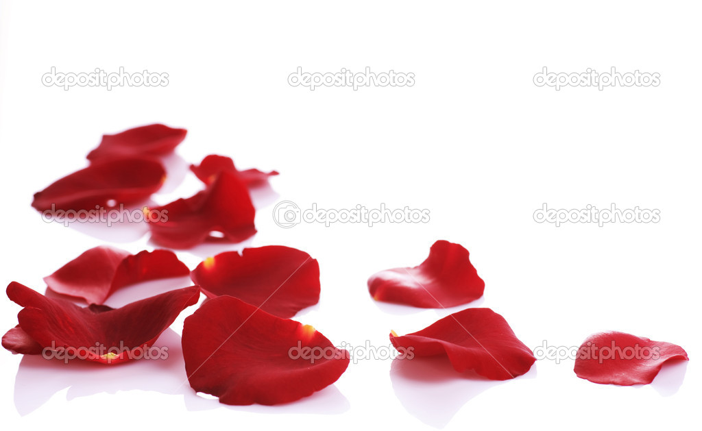Rose Petals Border. Isolated on white — Stock Photo #10685104