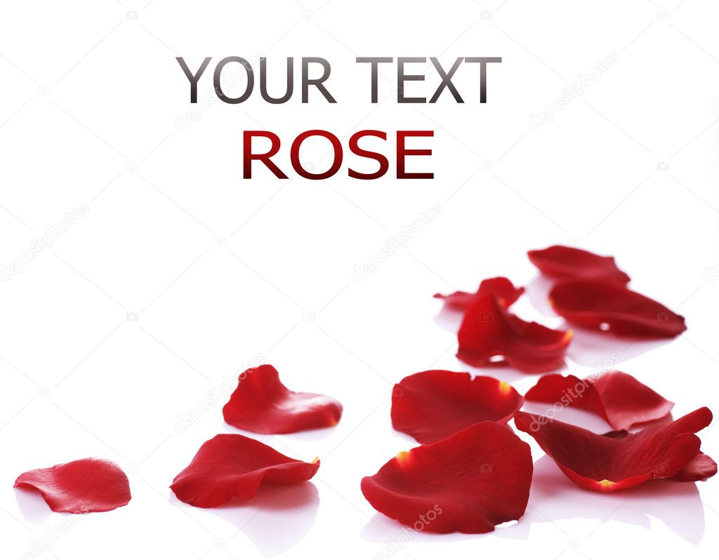 Rose Petals Border. Isolated on white — Zdjęcie stockowe #10685107