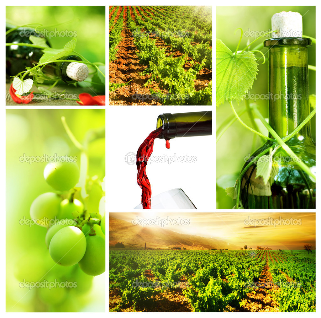 Wine. Beautiful Grapes Collage — Stock Photo #10686277