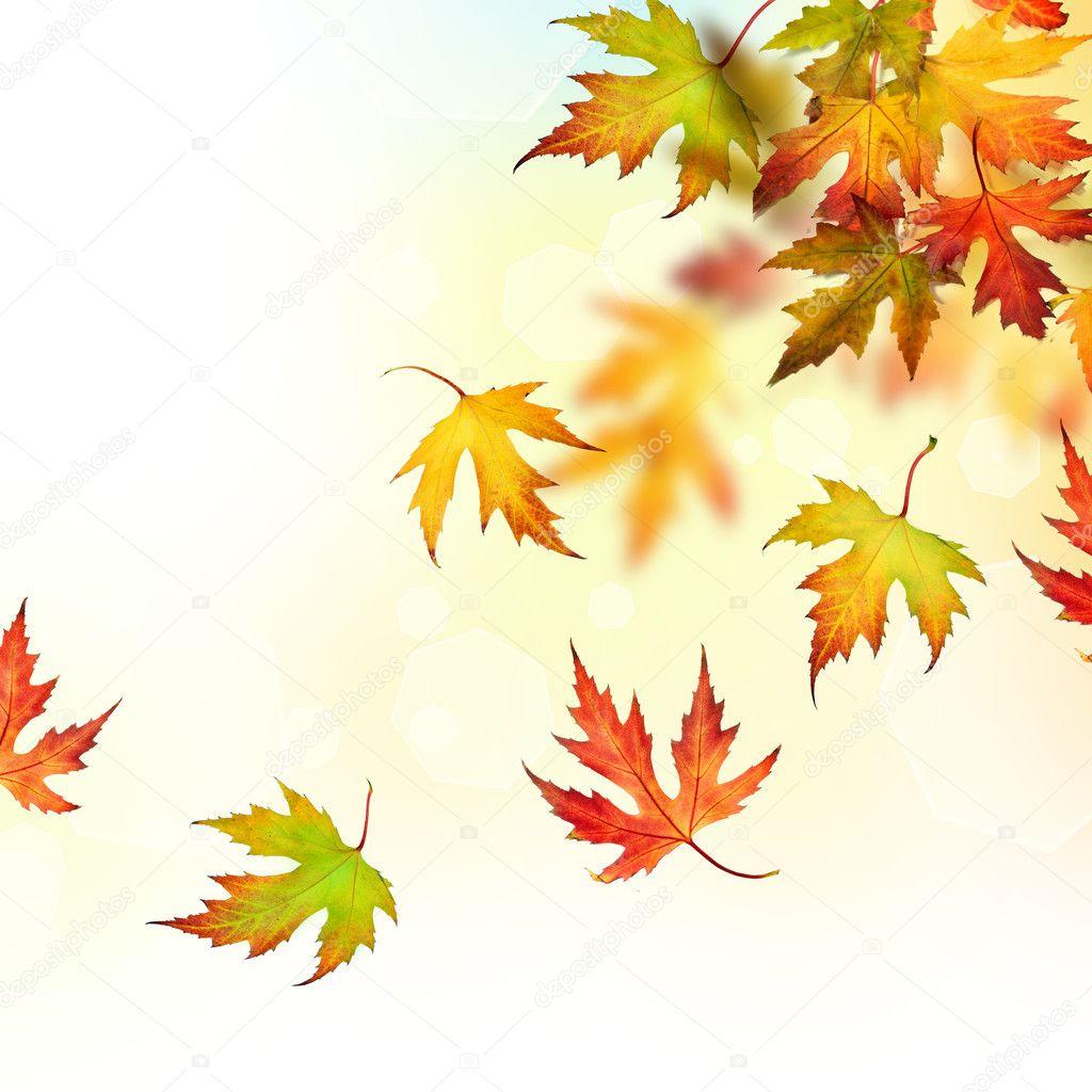 秋天落叶图片大全_秋天大树落叶简笔画