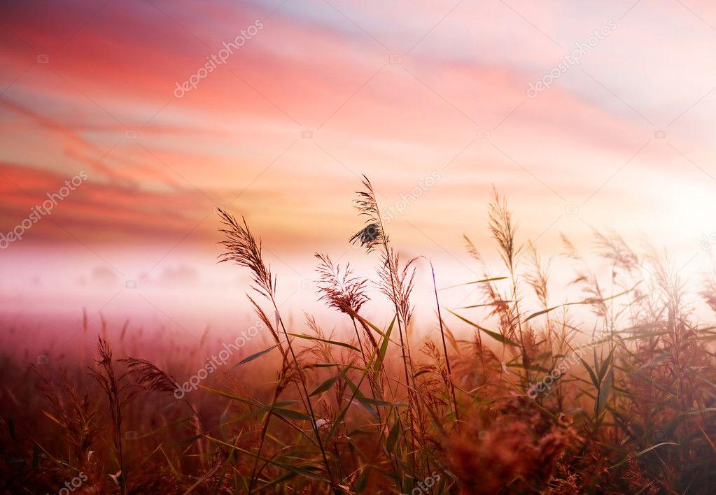 Фотообои Туманный Пейзаж. Ранним Утром Туман