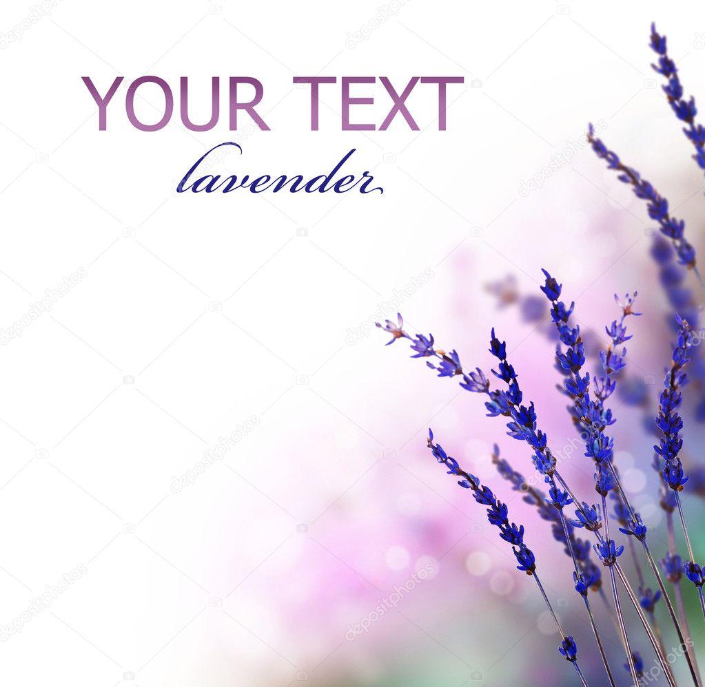 Lavender flowers border — Stock Photo © Subbotina #10687636