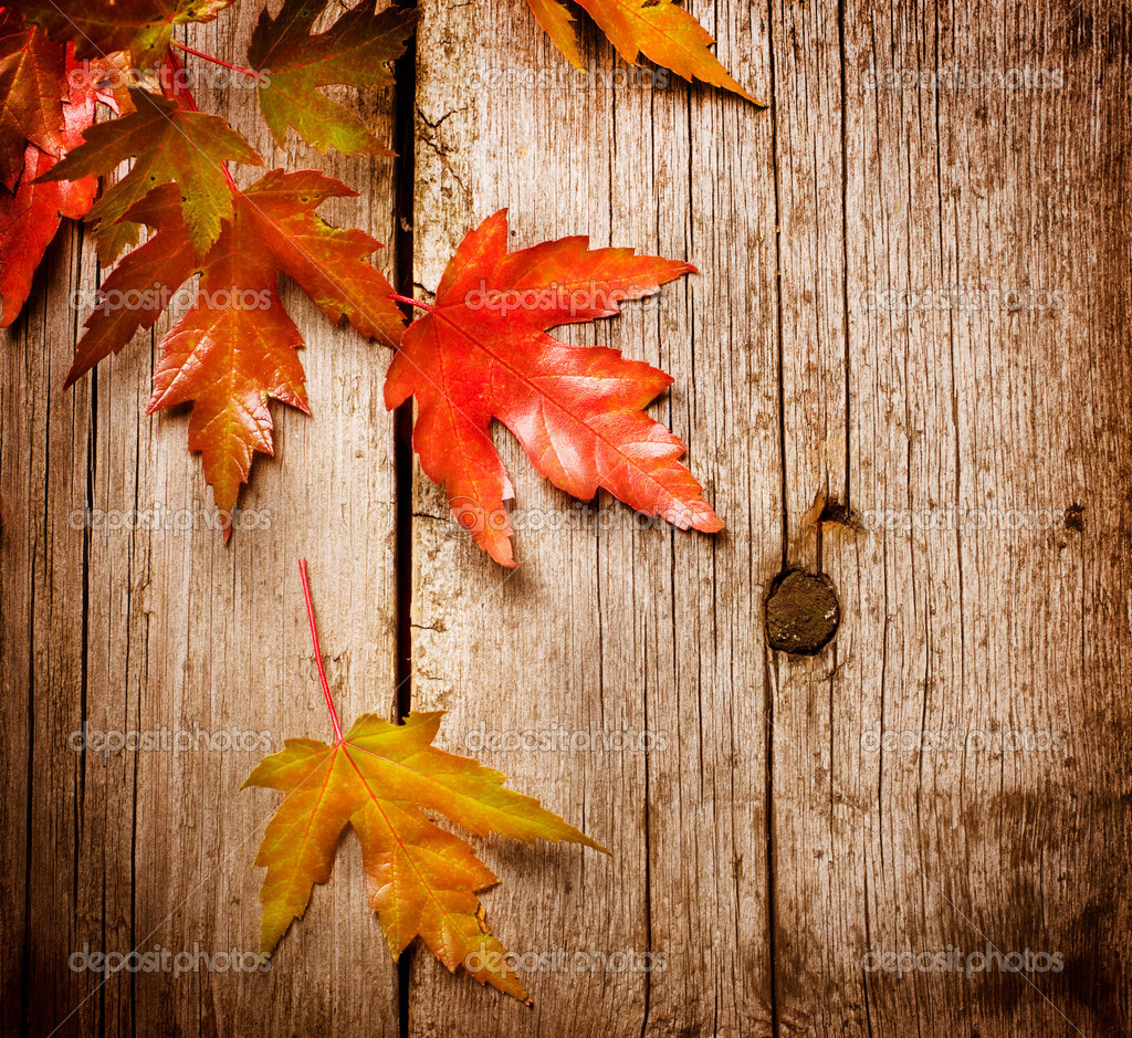 Autumn Leaves over wooden background.With copy space  Stock Photo #10687697