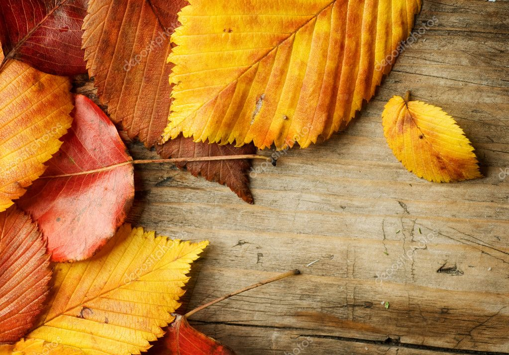 Autumn Leaves over wooden background. With copy space  Stock Photo #10687720