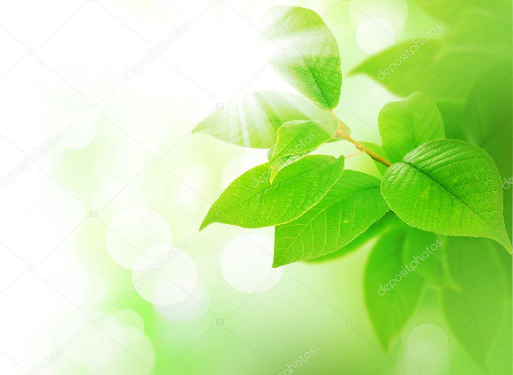 Spring Green Leaves Border — Stock Photo #10688611