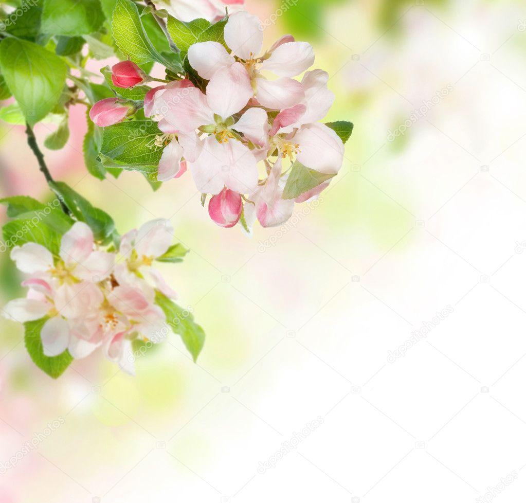 春天花边框 — 图库照片08subbotina#10688615
