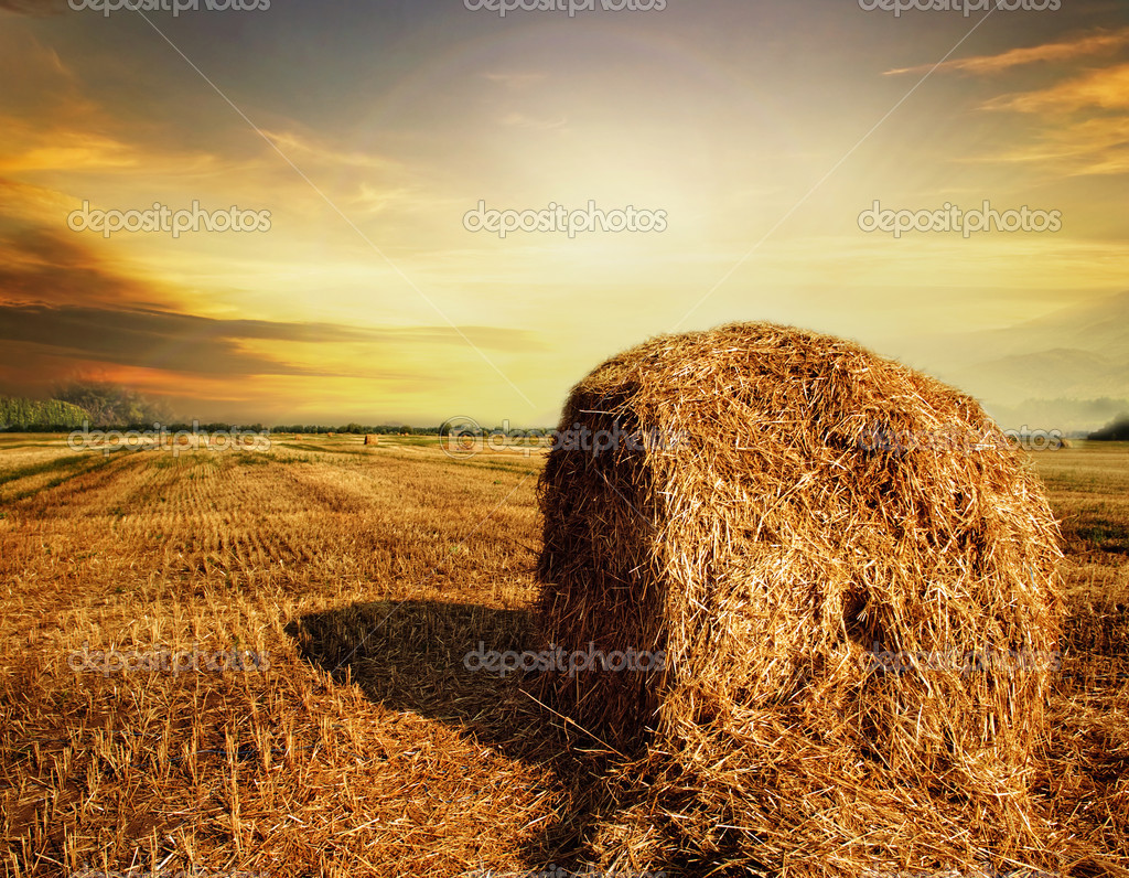 Harvest Concept  Stock Photo #10688653