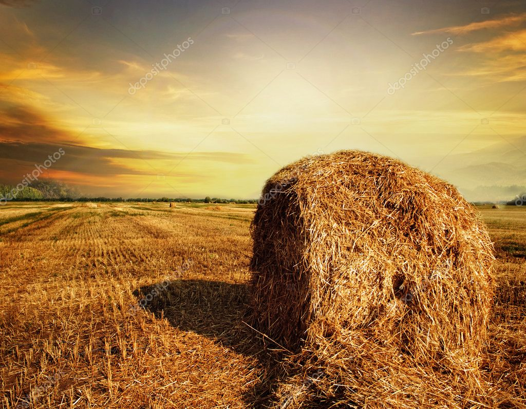 Harvest Concept  Photo #10688653