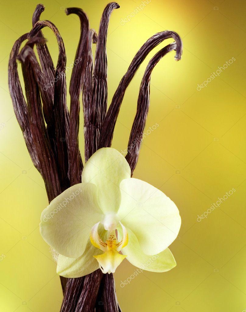 Гарантия бергамот бобы тонка ваниль замша иланг-иланг амбра