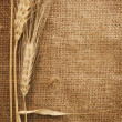 Wheat Ears over Burlap background — Stock Photo