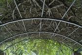 Liana branches interlacing — Stock Photo