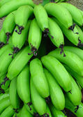 Bunch of green bananas — Stock Photo