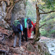 Group of trekkers hike through the beautiful autumn woods — Stockfoto