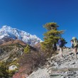 Two trekkers running on the road against Annapurna — Stock Photo
