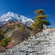Royalty-Free Stock Photo: View on  the Annapurna mountain Nepal