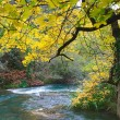 Mellow autumn on river bank — Stock Photo