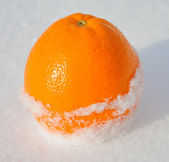 Citrus orange in white snow and with sun light — Stok fotoğraf