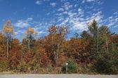 Beautiful fall colors scenery — Stock Photo