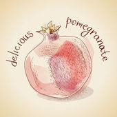 Vector illustration of vintage pomegranate — Stock Vector