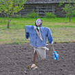 Royalty-Free Stock Photo: Scarecrow on potatoe field
