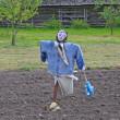 Scarecrow on potatoe field — Stock Photo