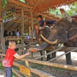 Elephant farm, Thailand — Stock Photo
