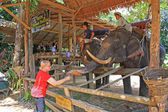 Elephant farm, Thailand — Stock Photo