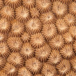 Abstract texture of hard coral — Stock Photo