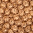 Stock Photo: Abstract texture of hard coral